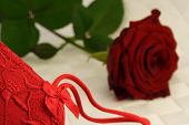 Rose And Lace 1