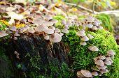 Mushrooms On A Mossy Tree Trunk.
