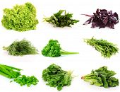 collage of culinary greens. isolated on white