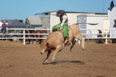 A Cowboy Competing In The Bull Riding Competition At A Country Rodeo poster