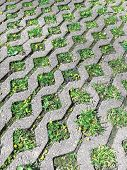 Grey Concrete Paving Blocks And Green Grass On Footpath In Garden poster