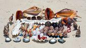 Seashells In Zanzibar