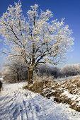 Frosty Scenery