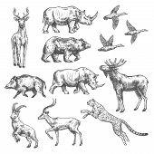 Animal Sketch Set Of Wild Bird, African Safari And Forest Mammal. Bear, Duck And Deer, Rhino, Antelo poster