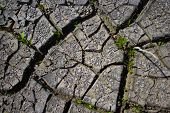 The Dried, Cracked Earth Is Gray. Sunny Day. Cracks Are Large And Small. Through The Cracks Grows Gr poster