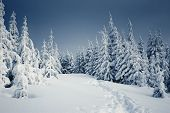 stock photo of winter landscape  - Winter landscape with fur - JPG