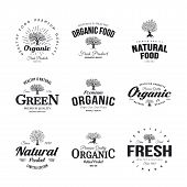 Organic Natural And Healthy Farm Fresh Food Retro Emblem Set. Olive Tree Vintage Old Logo Badge Isol poster