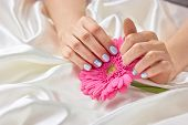 Female Manicured Hands Holding Gerbera. Beautiful Woman Hands With Gentle Winter Manicure Holding Pi poster