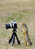 Squirrel Taking A Picture