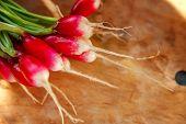 Summer Harvested Red Radish. Growing Organic Vegetables. Large Bunch Of Raw Fresh Juicy Garden Radis poster