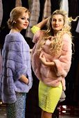 Women In Violet And Pink Fur Coats. Winter Clothing Concept. Ladies With Blond Hair In Furry Clothes poster