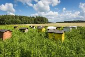 Polish Landscape With Beehives