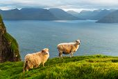 Morning view on the summer Faroe islands with two sheeps on a foreground. Kalsoy island, Denmark. La poster