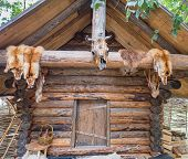 Two Fox Skin Hang On A On The Porch Of The Wooden Log House. Hunting And Fur Harvesting. Fox Peltry poster