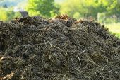 Pile Of Raw Cow Manure On The Farmyard. Close Up Of Pile Of Manure In The Countryside. Detail Of Hea poster