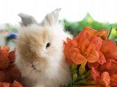 Brown Rabbit Eating Morning Calm Flower