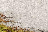 Creeper Leaf Over Stone