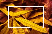 Lush Lava Background With Leaves And Rectangle Detail. Color Of 2020. Copy Space. poster