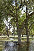 foto of cortez  - Monsoon season flood in Cortez park Phoenix Arizona - JPG