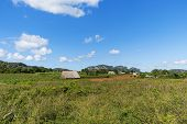 Vinales Valley, Pinar Del Rio, Cuba. A View Of A Tobacco Plantation And The Countryside In Vinales V poster