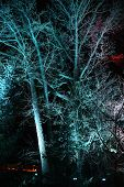 Branched Tree Trunk And Bare Branches Illuminated With Blue Light In Darkness Of Night. Colorful Tre poster