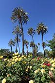 Maria Luisa Park. Seville, Spain