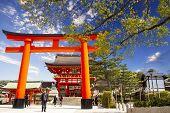 picture of inari  - Fushimi Inari Taisha  - JPG