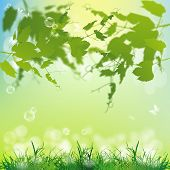 Spring nature background.Season nature.