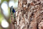 picture of tuatara  - chameleon on a Tree It looks relaxation - JPG