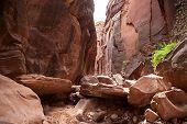 Buckskin Gulch Canyon