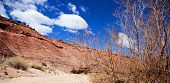 Paria Canyon Landscape
