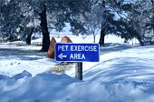 Pet Exercise Area
