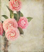Feminine Camellia Flowers With Vintage Texture