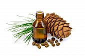 Oil With Cedar Cone And Nuts