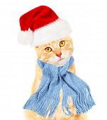 Ginger santa cat isolated on white background.