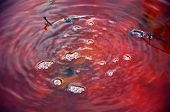Red toxic contaminated water from a copper mine in Geamana, Romania