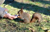 squirrel Eating Nuts With Hands