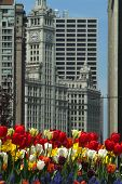 Spring At The Wrigley Building