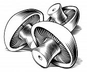 Vintage Retro Woodcut Mushrooms