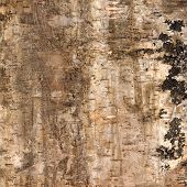 Background Of Birch Bark