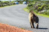Monkey On The Road