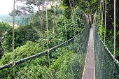 picture of canopy  - Canopy walk in the rainforest - JPG