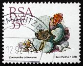 Postage Stamp South Africa 1988 Stone Plant, Succulent Plant