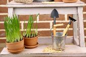 Green grass in flowerpots and gardening tools on brick wall background