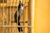 Red-whiskered Bulbul (Pycnonotus jocosus) in the bird cage