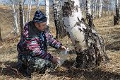 Gathering Birch Sap