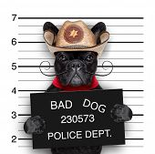 picture of delinquency  - bad mexican dog in a police mugshot