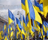 Many Ukranian flags