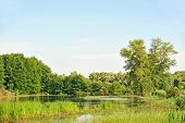 Poplar tree over lake