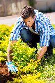 good looking gardener working in garden